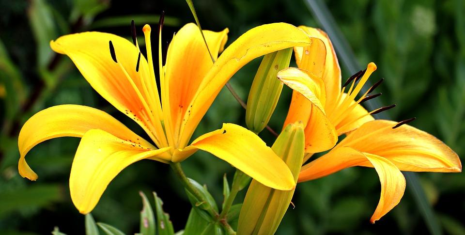 Fleurs ou plantes vertes : que choisir pour votre jardin ?