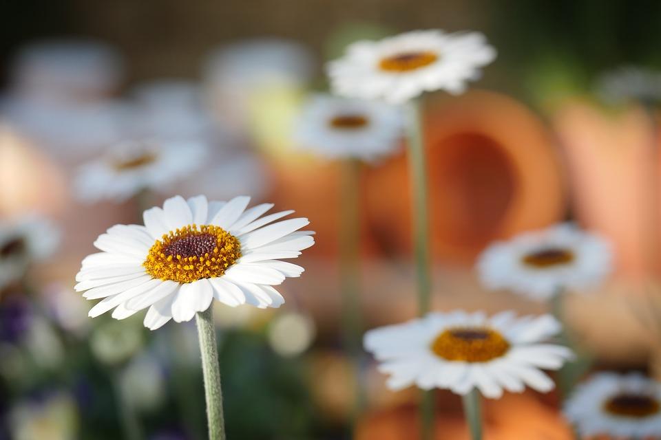 Trouvez un salon de jardin pas cher pour profiter de la nature dans le confort de votre maison