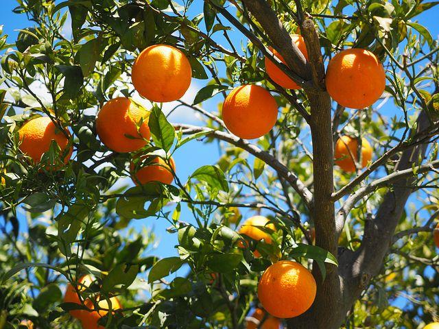 Planter des arbres fruitiers dans un jardin : une belle initiative - Esprit de jardin